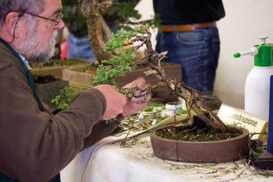 Piccolo bello oggi treviso news il quotidiano con for Vasi bonsai giapponesi
