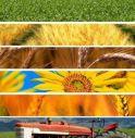 Dalle fonderie all'agroalimentare, le esperienze con Made Green in Italy.