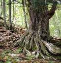 Impossibile fare escursioni: partono i corsi online di riconoscimento piante