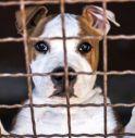 Confiscato allevamento di cani non autorizzato: 50 cani trasferiti al rifugio Enpa