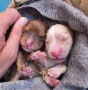 Cuccioli Enpa