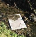 Ratti e nutrie lungo i canali a Castelfranco:
