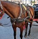 2018: Traforo per le auto, centro città per cavalli e carrozze