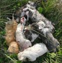 Gattini uccisi poco dopo essere nati: una passante li fotografa e il web si indigna
