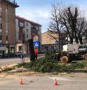 alberi abbattuti Treviso