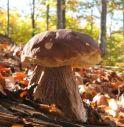 Va a funghi, inciampa e muore