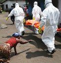 Pipistrelli possibile fonte di epidemia d'Ebola in Africa