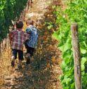 Bambini e pesticidi: effetti e controindicazioni