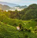 Prosecco Docg, ecco il nuovo protocollo viticolo