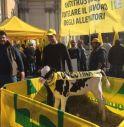 Torna la 'guerra del latte', è crisi profonda a un anno dalla fine delle quote