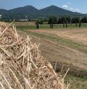 Vò rinasce dopo il Covid: lanciato un sito per raccontare le eccellenze del territorio