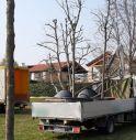 Il parco di Cima Mandria si arricchisce di 9 Gleditsie