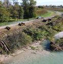 strage di alberi nelle aree golenali del Piave