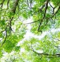 Godega, alberi gratis ai cittadini per risanare l'aria e tutelare l'ambiente