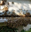 sciame api in fuga a Valdobbiadene
