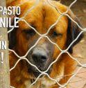 Ecco Dogalize, il social network per i cani
