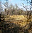 Dallo sterminio dei campi allo sterminio degli alberi: continua l'invasione dei vigneti