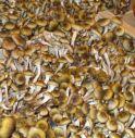 Ottima stagione per gli amanti dei funghi