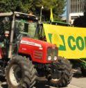 Assessorato al Cibo in Veneto, la proposta di Coldiretti Treviso