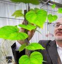 Lo scienziato di fama mondiale Stefano Mancuso, punto di riferimento per l'ambientalismo italiano