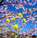 La primavera esplode: settimana stabile e molto mite