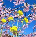 Bel tempo domenica e lunedì, ma sarà una Pasqua blindatissima