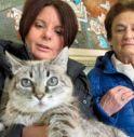 Molly, la (seconda) gatta più vecchia del mondo