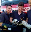 Gattini recuperati Cornuda