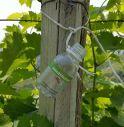 Vino e innovazione, lancio di insetti contro i parassiti