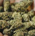 2 Kg di marijuana: in arresto tutta la famiglia