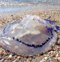 Strette d'assedio dalle meduse. Ragazzine salvate dalla Guardia costiera