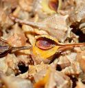 Chioggia, sequestrato un quintale di molluschi irregoalari