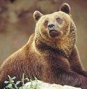 Orso torna ad essere avvistato su monte Baldo