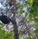 Incidente con il parapendio: rimane incastrato tra gli alberi