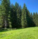 Il Cansiglio in Veneto è la prima foresta certificata in Italia per la biodiversità con il nuovo standard