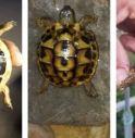 ritrovamento tartaruga