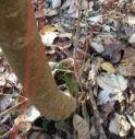 Trappole nel Fenderl: un cane è rimasto quasi soffocato