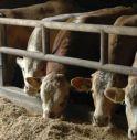 8 tonnellate di mangime sequestrato: rischi per il benessere degli animali