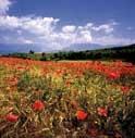 NUOVA STRETTA UE SUI PESTICIDI IN AGRICOLTURA