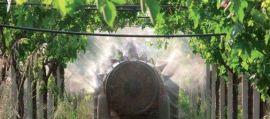 """Viticoltura: """"Tra 10 anni l'uso di pesticidi dovrà essere dimezzato"""""""