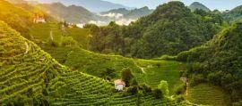 Paesaggio-del-Conegliano-Valdobbiadene-Prosecco_photo-credits-Arcangelo-Piai_1.jpg
