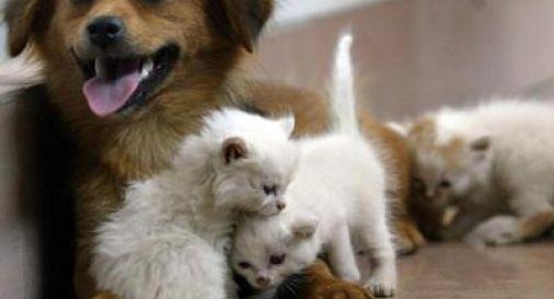 Capodanno 2020, la guida Lav per gli amici animali.