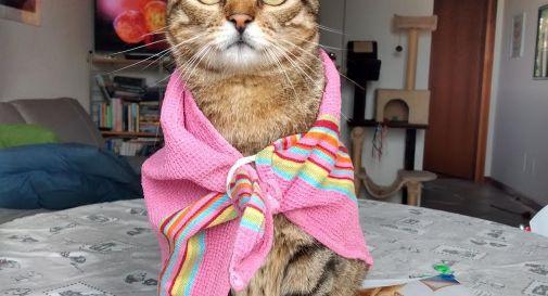 Astro il gatto zen