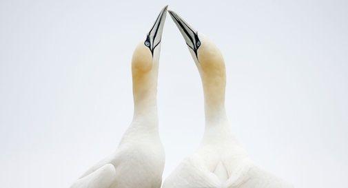 FOTO WWF
