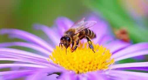 Treviso comune amico delle api