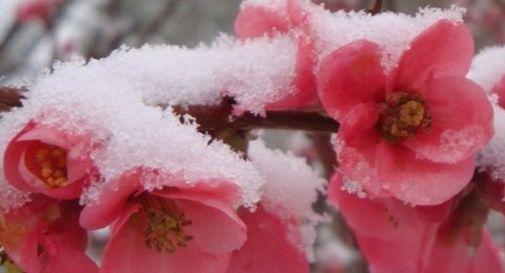 Neve di primavera e temporali, danni in campagna