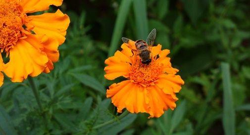 Le api di Luca sono salve