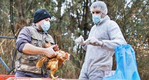 Influenza aviaria nell'uomo