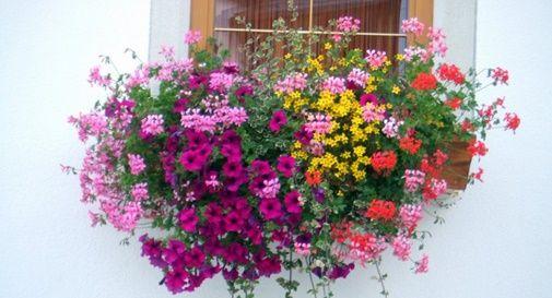 Territorio fiorito