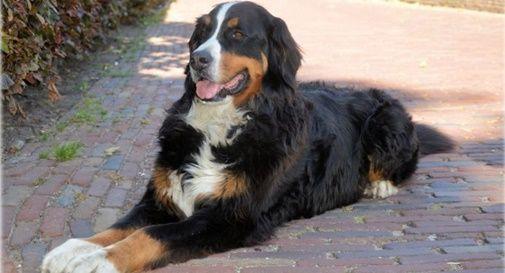 Bocconi avvelenati a Miane: un cane ha rischiato di morire